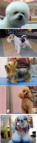 стрижка собак